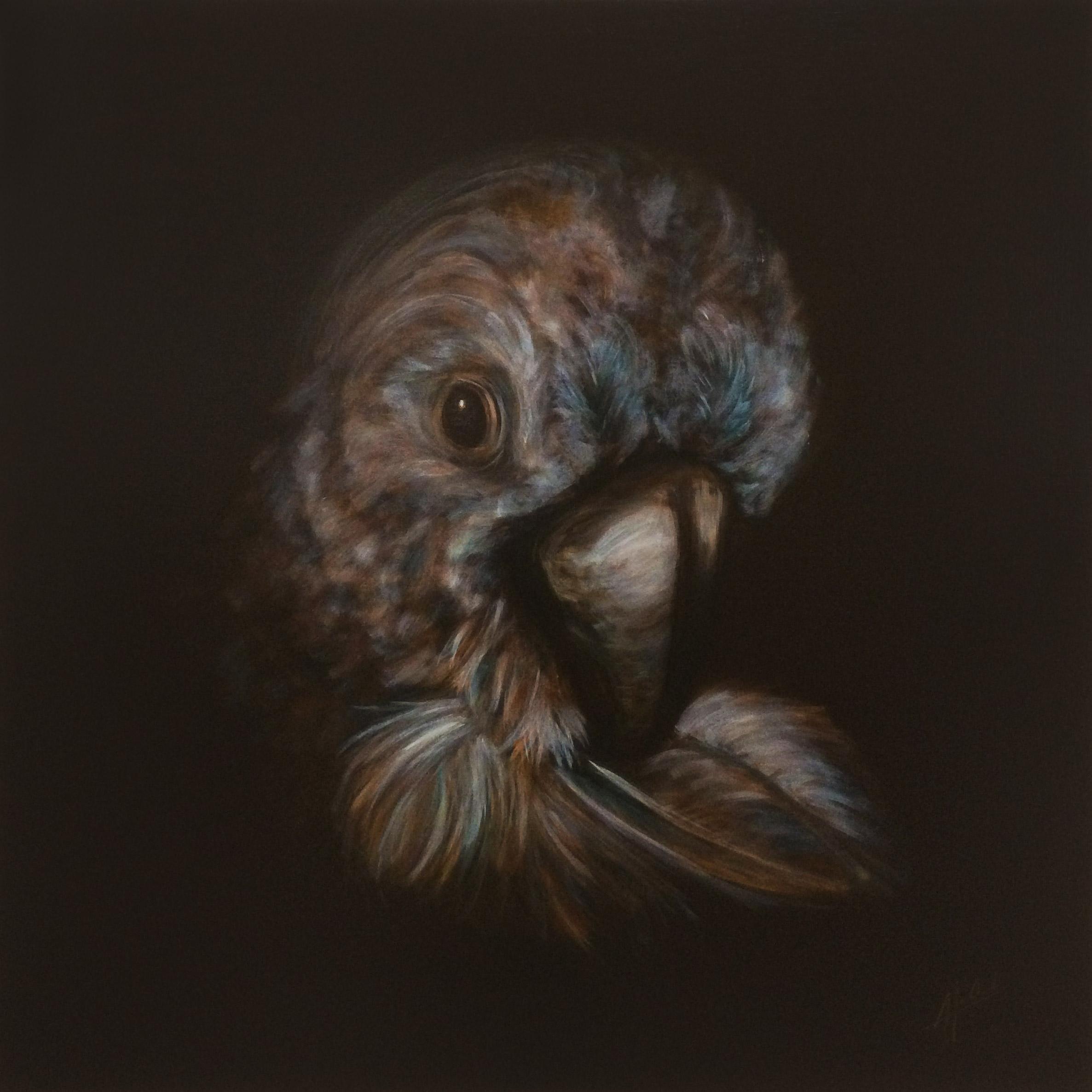 Cockatoo – A New Life, Anna van Oel