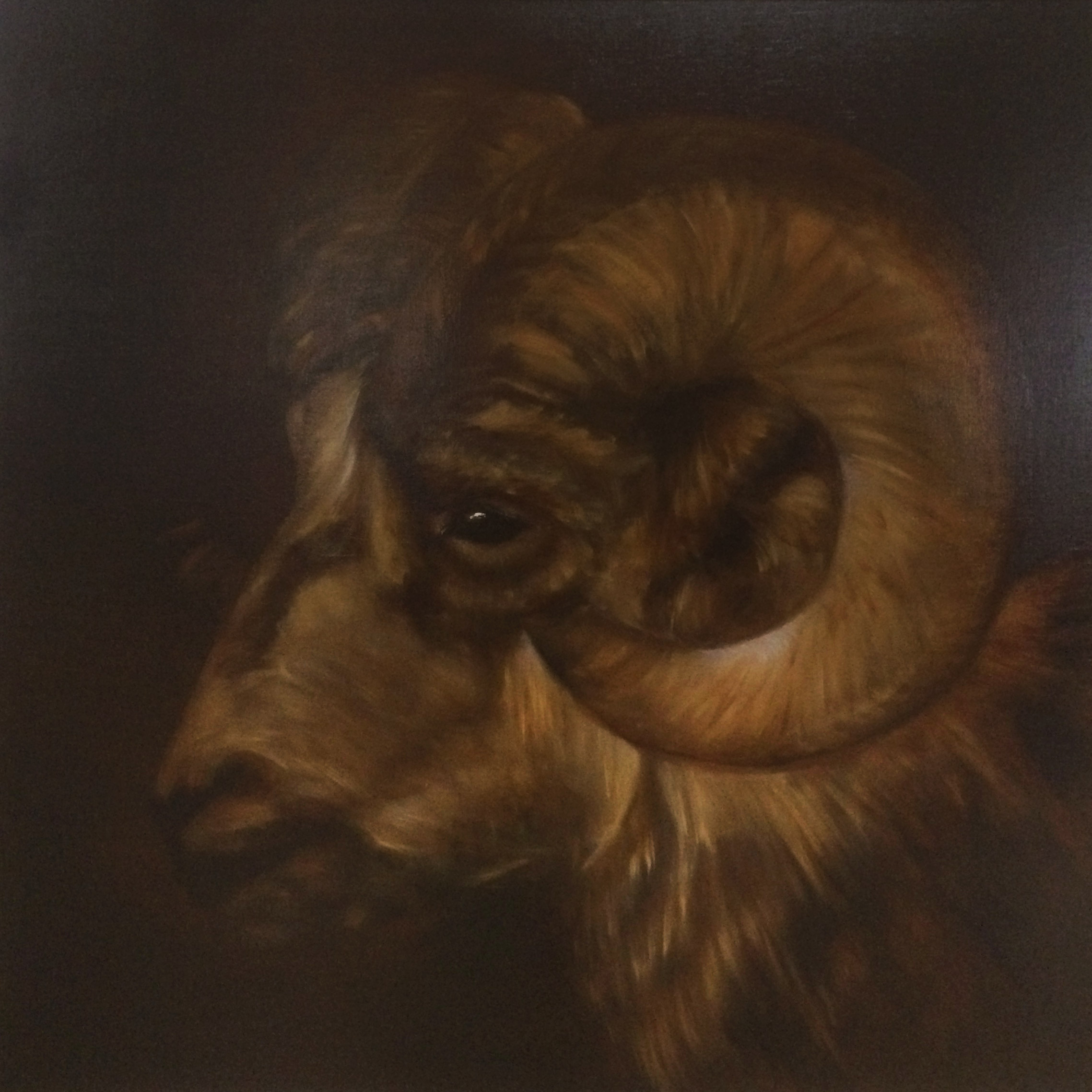 Ram – Zodiac, Anna van Oel